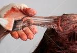 ist2_7887712-applying-hair-colour1