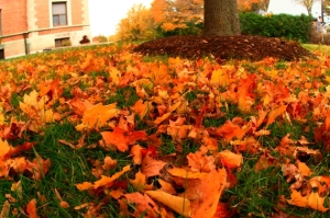 fall-leaves-on-the-ground